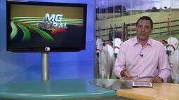 MG Rural: Programa de domingo 01/01/2017 - na íntegra
