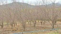 Agricultores não recebem dinheiro do Garantia Safra em Maranguape