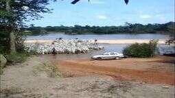 Produtor registra travessia de rebanho no rio Javaés, na Ilha do Bananal
