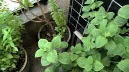 Confira as dicas para cultivar uma horta em casa ou apartamento