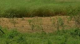 Produção de folhosas cai 80% durante época de calor intenso, diz Emater