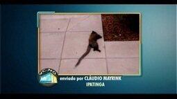 Telespectador de Ipatinga encontra macaco morto no Bairro Horto