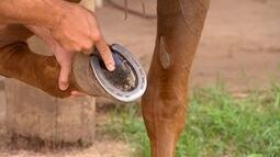 Pesquisa mostra que cascos de cavalos criados soltos crescem mais