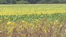 Plantio de soja aumentou mais de 70% na região do Vale do Jamari