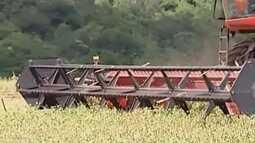 Colheita de feijão no Alto Paranaíba confirma previsão de safra recorde dos grãos