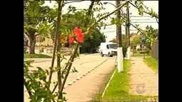 Estatística de violência em Pelotas assusta população