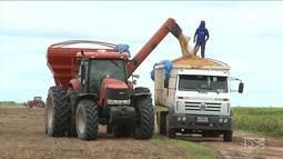 Agricultores do Sul do MA participam de abertura da colheita da safra agrícola