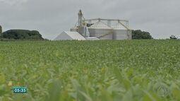 Em MS, 30% da área de cultivo da soja já foi colhida