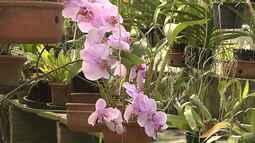 Quadro Meu Jardim dá dicas de como cultivar orquídeas