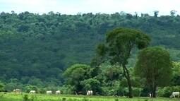 Globo Natureza: Reserva das Perobas