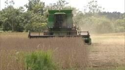 Produtores de MS já plantaram 75% da safrinha de milho para evitar plantio fora de época