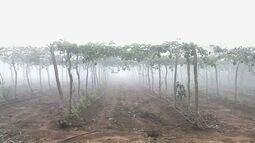 Em Guaraciaba do Norte, agricultores mantêm solo fértil para diversas culturas