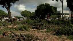 Governo derruba árvores no Gama para construir prédios