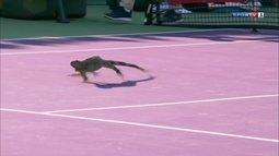 Iguana invade a quadra e paralisa partida no Masters 1000 de Miami