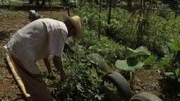 Terracap pretende acabar com horta comunitária para construir conjunto habitacional
