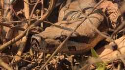 Diversidades de espécies são filmadas na Mata de Santa Genebra.