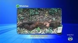 Laudo descarta febre amarela em macaco encontrado morto a tiros em Sarapuí
