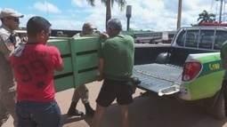 Capivara é capturada e solta na Zona Rural de Guajará-Mirim