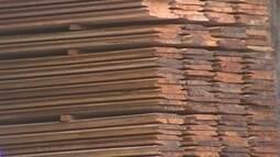 Amapá terá maior controle sobre exploração e exportação de produtos madeireiros
