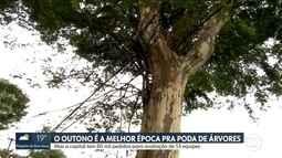 Audiência na Câmara dos Vereadores discute como atender demanda de poda de árvores