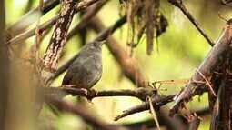 Recanto Japonês, de Poços de Caldas, protege aves difíceis de avistar (Bloco 01)