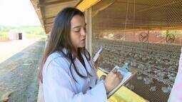 Para prevenir gripe aviária, técnicos do IMA vistoriam granjas no Centro-Oeste