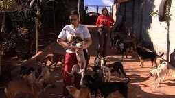ONG cuida de mais de 200 cães e gatos para adoção em Goiânia