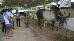 Exposul Rural movimenta Cachoeiro de Itapemirim, no Sul do ES