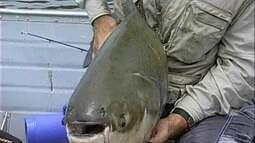 Tambaqui de 28,5 quilos entra para a história de pescas do Terra da Gente