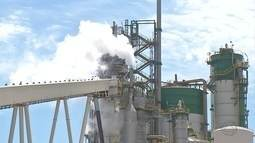 Setor de cana-de-açúcar é destaque no aumento da exportação de industrializados em MS