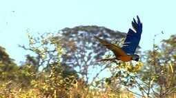 De dez animais retirados da natureza apenas um sobrevive, segundo Ibama