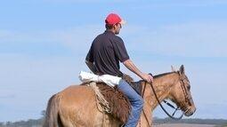Cavalos são companheiros para trabalhos de toda hora na fazenda