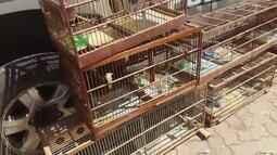 Pássaros silvestres são apreendidos em Ceilândia, no DF