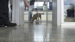 Cachorro Moro passa por porta giratória do Fórum do Paranoá, no DF