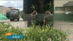 Mudas de plantas chegam ao Batalhão do Exército em CG para distribuição à população