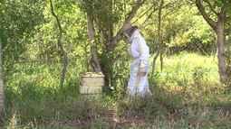 31 pessoas morreram em todo país vítimas de ataques de abelhas em 2016