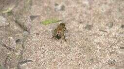 Homem atacado por abelhas segue internado em São Carlos