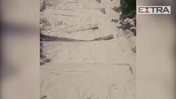 Banhistas encontram jiboia em praia de Itacoatiara, Niterói