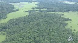 Acordo permite cancelamento de mais de mil registros de imóveis na floresta estadual do AP