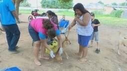 Vacinação de cães e gatos será no próximo sábado em Guajará-Mirim