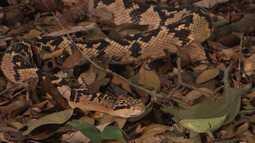 Médico apaixonado por cobras transforma sítio em serpentário em Itacaré, no sul da Bahia
