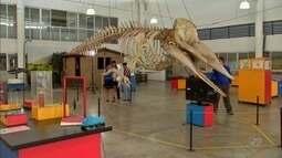 Cearense é especialista na montagem de esqueletos de grandes mamíferos