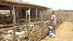 Produtores de Madalena recebem caprinos para garantirem a produção