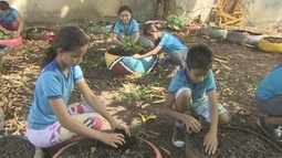 Criação de horta em escola pública do Amapá muda rotina dos alunos