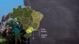 Minas Gerais é o centro do mapa do café especial no Brasil