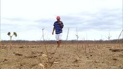 Agricultores do RN acreditam que o ano de 2018 será de boas chuvas