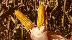 Nova safra começa a ser semeada no Paraná