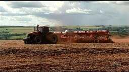 Plantio do milho safrinha cai neste ano em Goiás em relação ao ano anterior