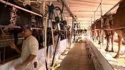 Produção de leite aumenta no Sul do ES em 2017