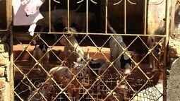 Dezenove pit bulls são resgatados por suspeita de maus-tratos em Goiânia